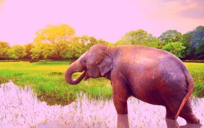 Des sentiments négatifs, des éléphants roses et des ballons rouges