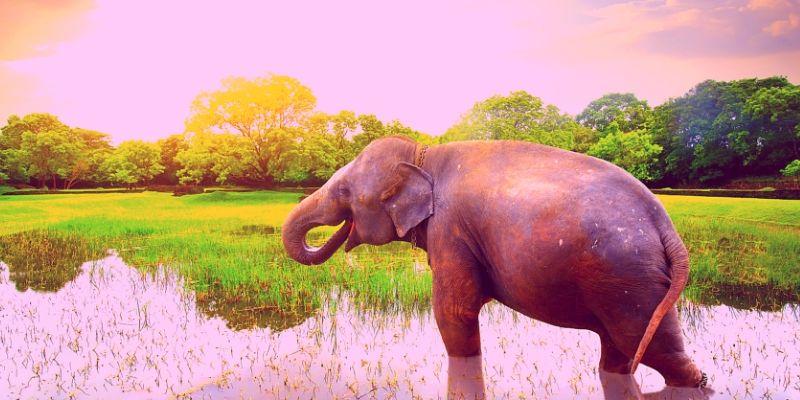 Über negative Gefühle, rosa Elefanten und rote Wasserbälle